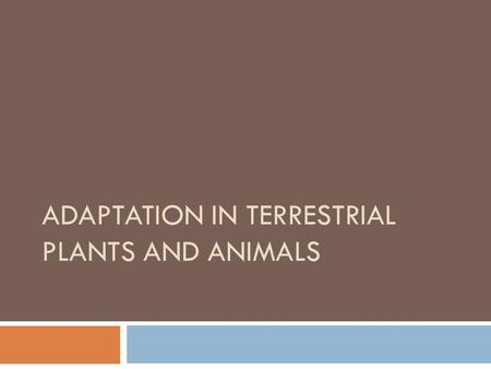 ADAPTATION IN TERRESTRIAL PLANTS AND ANIMALS TERRESTRIAL HABITATS  Terrestrial Habitat: Plants and animals that live on land, are said to be living.