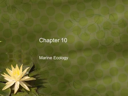 Chapter 10 Marine Ecology. Ecology Ecology: study of the interactions between organisms and their environment Habitat: specific location where an organism.