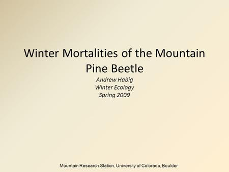 Winter Mortalities of the Mountain Pine Beetle Andrew Habig Winter Ecology Spring 2009 Mountain Research Station, University of Colorado, Boulder.