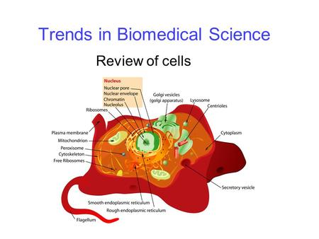 Trends in Biomedical Science