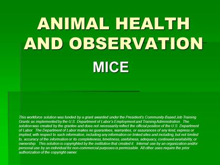 ANIMAL HEALTH AND OBSERVATION