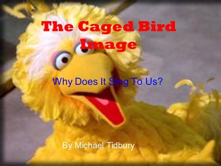 The Caged Bird Image Why Does It Sing To Us? By Michael Tidbury.