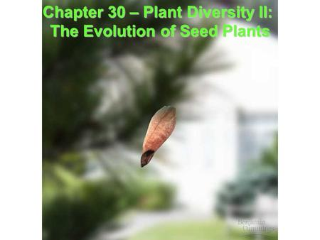 Chapter 30 – Plant Diversity II: Chapter 30 – Plant Diversity II: The Evolution of Seed Plants.