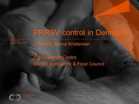 VSP.LF.DK PIG RESEARCH CENTRE PRRSV control in Denmark Charlotte Sonne Kristensen Pig Research Centre Danish Agriculture & Food Council.