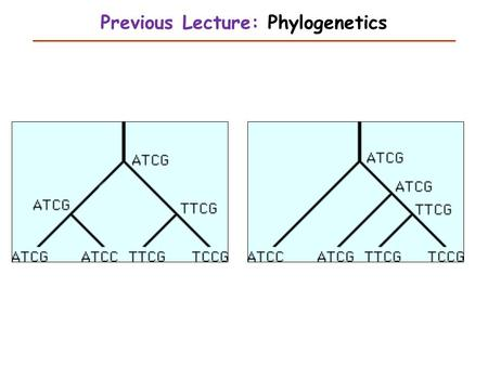 Previous Lecture: Phylogenetics. Analysis of Variance This Lecture Judy Zhong Ph.D.