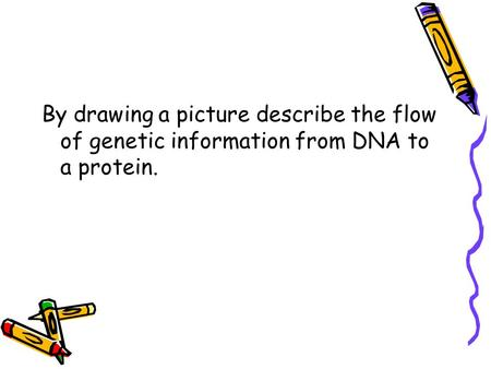 By drawing a picture describe the flow of genetic information from DNA to a protein.