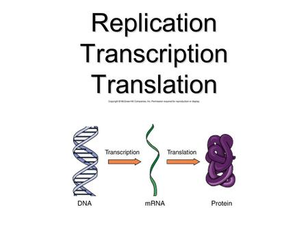 Replication Transcription Translation. DNA 1.Its structure is a Double Helix 2. Made up of nucleotides which consist of a phosphate group, a sugar, and.