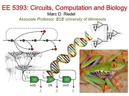 Marc D. Riedel Associate Professor, ECE University of Minnesota EE 5393: Circuits, Computation and Biology ORAND.