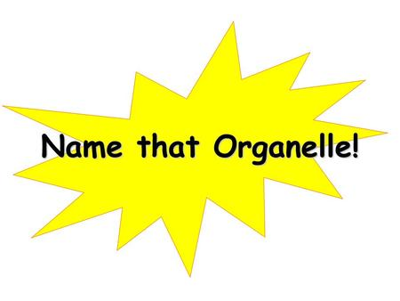 Name that Organelle!.