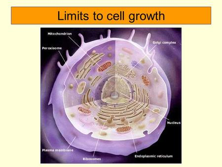 Limits to cell growth. Why does a cell divide? 1. The larger a cell becomes, the more demand on its DNA. 2. Cell has more trouble moving nutrients and.