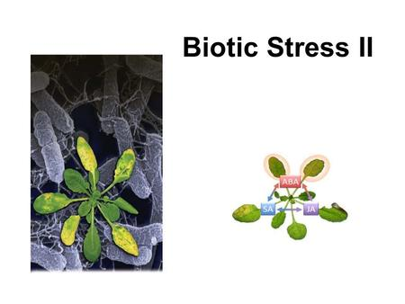 Biotic Stress II. 1. Agents of Biotic Stress 2. Physical and chemical barriers and pathogen recognition 3. Basal Immune System 4. SAR 5. Hipersensitivity.
