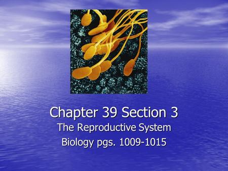 Chapter 39 Section 3 The Reproductive System Biology pgs. 1009-1015.