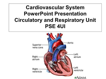 Cardiovascular System PowerPoint Presentation Circulatory and Respiratory Unit PSE 4UI.