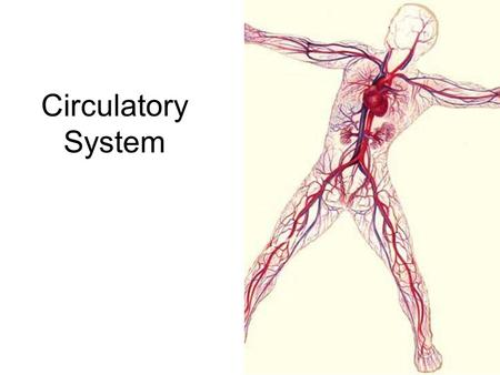 Circulatory System. Blood Heart Blood vessels Cardiovascular System.
