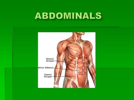  Made up of three major muscles  Transversus abdominis  It is a the innermost muscle. It is a flat muscle that is immediately between the Rectus Abdominis.