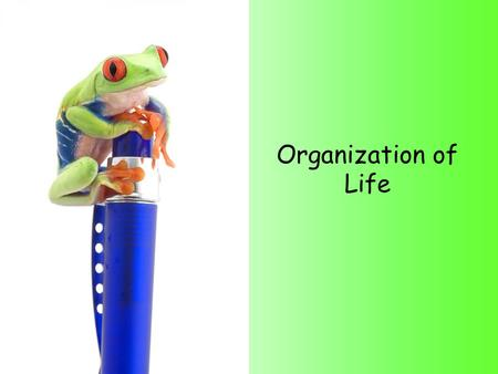 Organization of Life. The Organization of Life Objective: You will be able to explain the levels of organization and put them in the correct order. Itinerary: