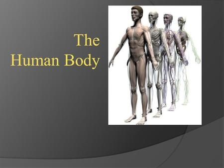 The Human Body. Levels of Organization in Humans.