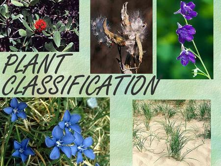 PLANT CLASSIFICATION. We will be learning about and examining the different categories of plant life found on earth today. You have been living around.