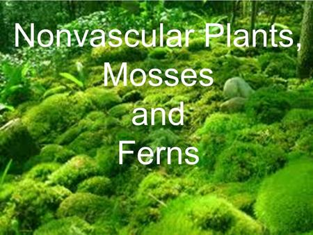 Nonvascular Plants, Mosses and Ferns.