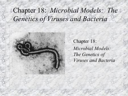 Chapter 18: Microbial Models: The Genetics of Viruses and Bacteria n Chapter 18: n Microbial Models: The Genetics of Viruses and Bacteria.