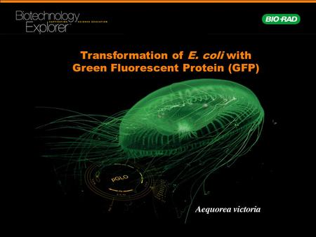 Transformation of E. coli with Green Fluorescent Protein (GFP)