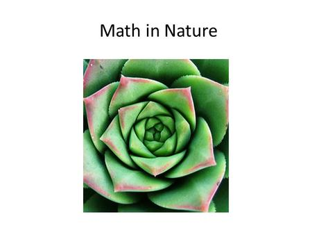 Math in Nature. Fibonacci Sequence in Nature The sequence begins with numbers 0, 1, 1, 2, 3, 5, 8, 13, 21, 34, 55, 89, 144 and continues.