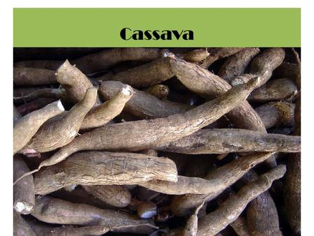 Cassava. Crop management Planting pattern ….. The plant spacing. referring to planting density and spatial distribution. Response significantly to plant.