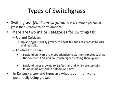 Types of Switchgrass Switchgrass (Panicum virgatum): is a summer perennial grass that is native to North america. There are two major Categories for Switchgrass: