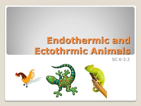 Endothermic and Ectothrmic Animals