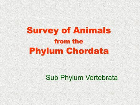 Survey of Animals from the Phylum Chordata Sub Phylum Vertebrata.