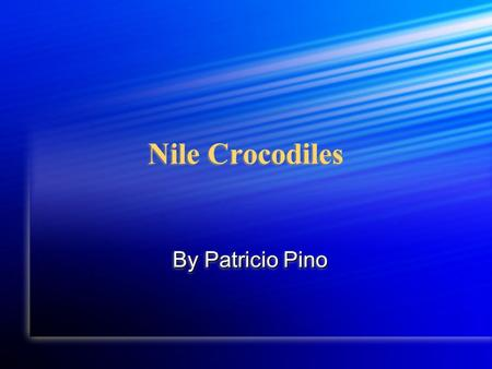 Nile Crocodiles By Patricio Pino For the past few weeks I've been studying the Nile crocodile. In the coming few pages I will tell you the main facts.