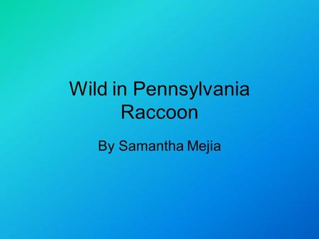 Wild in Pennsylvania Raccoon By Samantha Mejia. Introduction Did you know that a raccoon is a relative of a bear? Well they are. Read on to learn more.