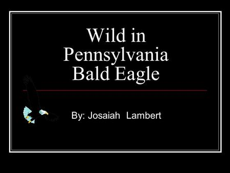 Wild in Pennsylvania Bald Eagle By: Josaiah Lambert.