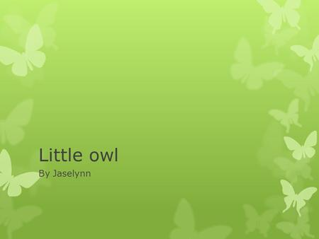 Little owl By Jaselynn. Appearance  It has a yellow beak  It has white, brown feathers  It has black toe nails.