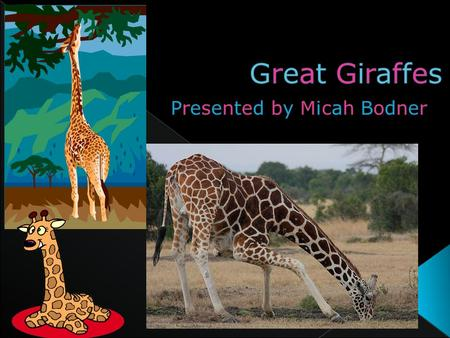  Giraffes are mammals.  They have very long necks.  The tallest Giraffe is up to nineteen feet tall!