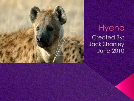 You were in Africa walking in the wild and you hear something laughing behind you. You turned around and there were 3 hyenas. You were scared and amazed.