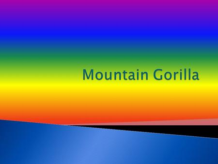 Today you will learn about Mountain Gorillas. They are amazing. That's why Im writing about them. I hope you learn a lot.