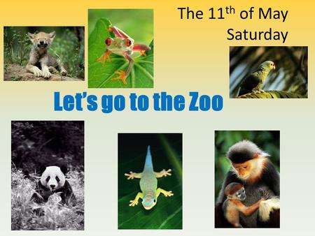 The 11 th of May Saturday Let's go to the Zoo. Phonetic Drill [b] [k] [l] [p] brown bear kangaroolionparrot zebra crocodileleopardpolar bear bear cameldolphinpeacock.