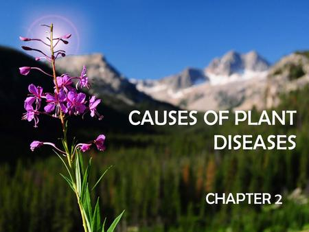 CAUSES OF PLANT DISEASES