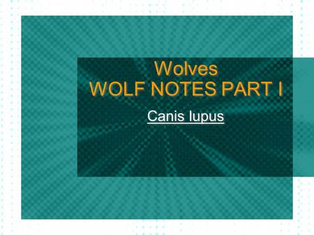 Wolves WOLF NOTES PART I Canis lupus. Dogs came from… wolves? Dogs were domesticated 15,000 years ago from wolves Wolves and dogs are genetically similar.