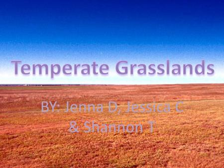 BY: Jenna D, Jessica C & Shannon T. Location Grasslands are located on every continent with the exception of Antarctica.