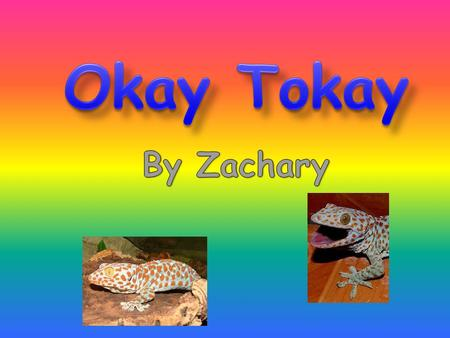 If you want to learn about a Tokay gecko, you will right now! They are amazing because they can walk on the wall and even on the ceiling!! In this report.