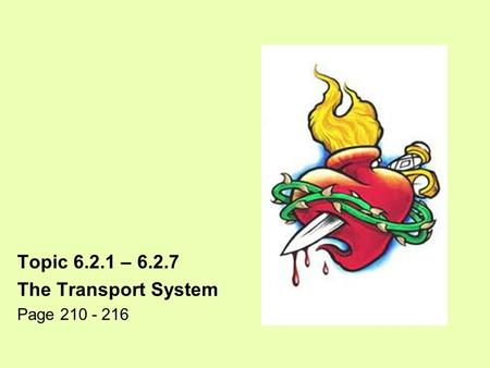 Topic 6.2.1 – 6.2.7 The Transport System Page 210 - 216.