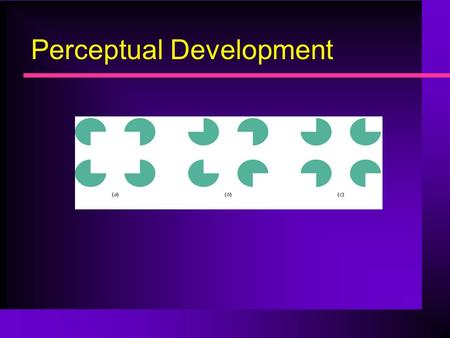 Perceptual Development. General Issues Why study perceptual development Erin – why is vision so quick to develop? How different from cognitive development?