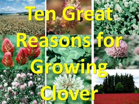 Ten Great Reasons for Growing Clover. 1.Biological Nitrogen Fixation 2.Improved Forage Quality 3.Better Distribution of Growth 4.Increased Forage Yield.
