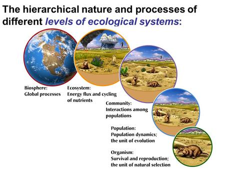 The hierarchical nature and processes of different levels of ecological systems: