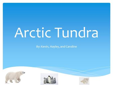 Arctic Tundra By: Kevin, Hayley, and Caroline.  Northern Hemisphere  Falls between 2 biomes: Taiga and the Ice Caps Global Locations.