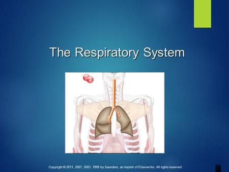 Copyright © 2011, 2007, 2003, 1999 by Saunders, an imprint of Elsevier Inc. All rights reserved. The Respiratory System.