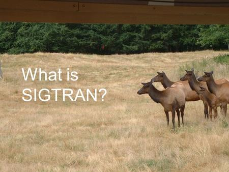 What is SIGTRAN?. SIGTRAN Signaling Transport (SIGTRAN) is an Internet Engineering Task Force (IETF) standard for transporting Public-Switched Telephone.