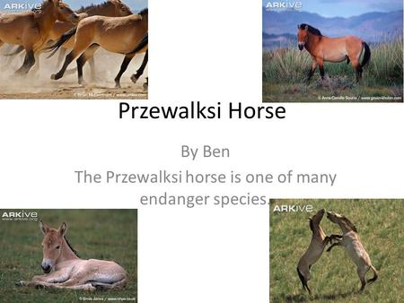 By Ben The Przewalksi horse is one of many endanger species.